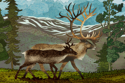 Boreal Woodland Caribou by Tin Can Forest