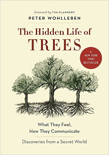 To continue opening the doors of your perception, check out Wohlben's book, The Hidden Life of Trees.