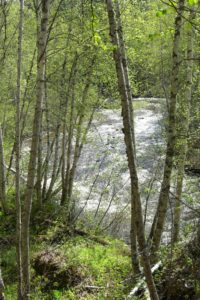 Photo of Hemp Creek
