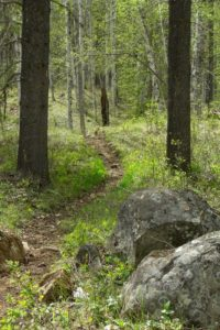 photo of trail in forest